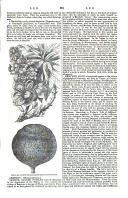 Pagina 381