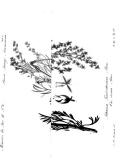 Pagina 488
